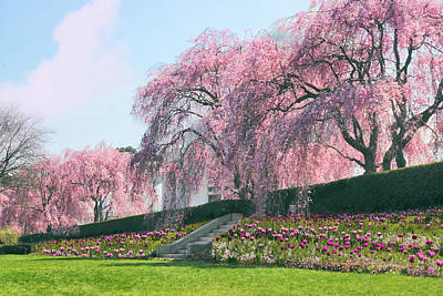 Designs Similar to Weeping Spring Cherry