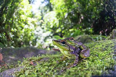 Designs Similar to Mating Black-spotted Rock Frogs