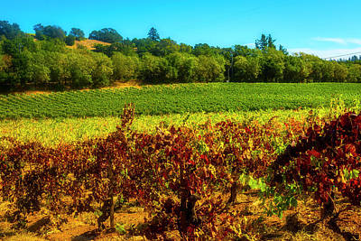 Designs Similar to Napa Valley Vineyard