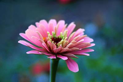 Designs Similar to Zinnia In Bloom