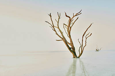 Designs Similar to Oak In The Ocean by Jon Glaser