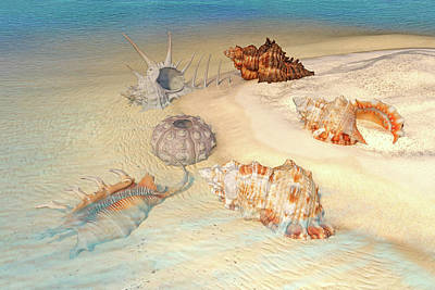 Designs Similar to Ocean Shells by Betsy Knapp