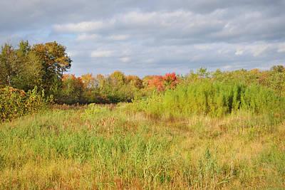 Designs Similar to October Wetlands by Luke Moore