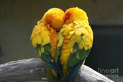 Designs Similar to Pair Lovebirds