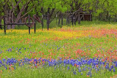 Designs Similar to Pattern Of Texas Paintbrush