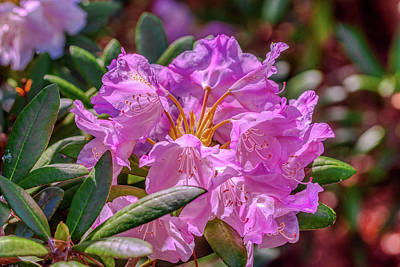 Designs Similar to Pretty Pink Rhododendron