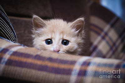Designs Similar to Scared Kitten Hiding At Home
