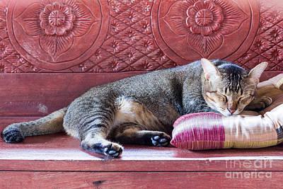 Designs Similar to Sleeping Cat by Pun483