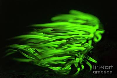 Designs Similar to Snakelocks Anemone Fluorescing