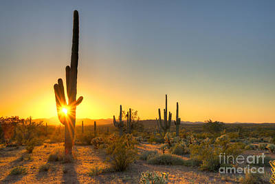 Prickly Pear Photographs