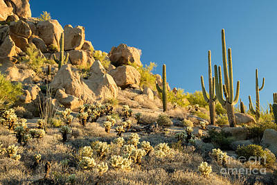 Designs Similar to Sonoran Desert Landscape