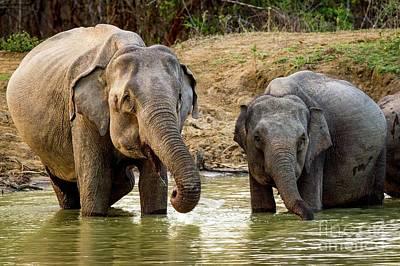 Designs Similar to Sri Lankan Elephants Drinking