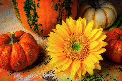 Designs Similar to Sunflower And Pumpkins