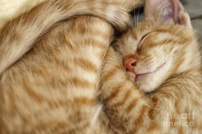 Designs Similar to Sweet Dreams, Sleeping Cat