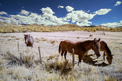 Designs Similar to Three Horses In Colorado