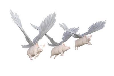 Designs Similar to Three Little Pigs Transparent