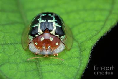 Designs Similar to Tortoise Beetle