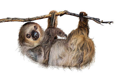 Designs Similar to Two-toed Sloth Named Fernando