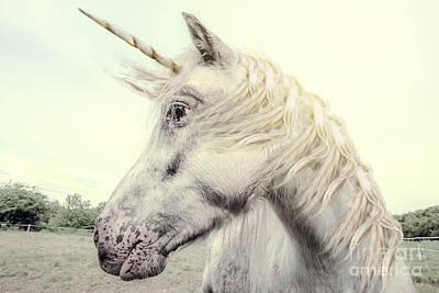 Designs Similar to Unicorn Photography Realistic