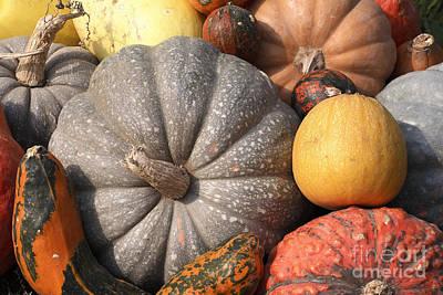 Designs Similar to Various Pumpkins