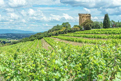 Designs Similar to Vineyard, Rhone Valley, Ruins