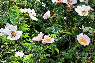 Designs Similar to Wild Rose (rosa Canina)