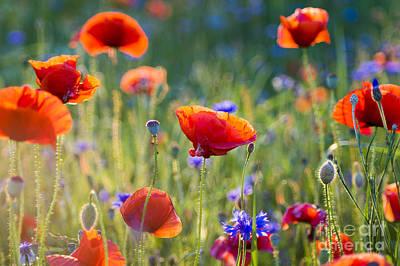 Designs Similar to Wildflowers Poppies