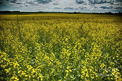 Designs Similar to Yellow Meadow by Ruth H Curtis