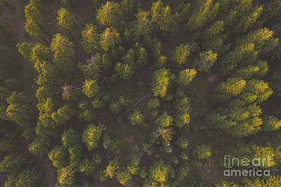 Designs Similar to Tree Tops  From Above