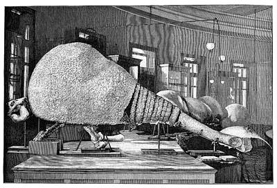 Designs Similar to Doedicurus Fossil