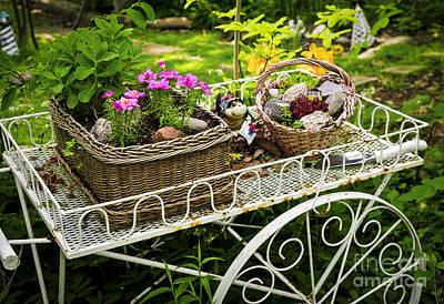 Gardens Photographs