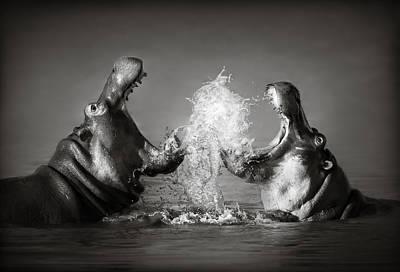 Hippopotamus Photographs