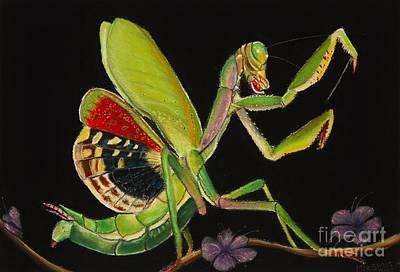 Butterfly Prey Original Artwork