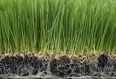 Grass Roots Prints