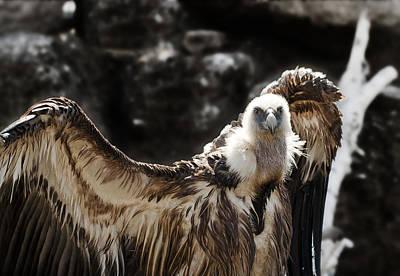 Vulture Original Artwork