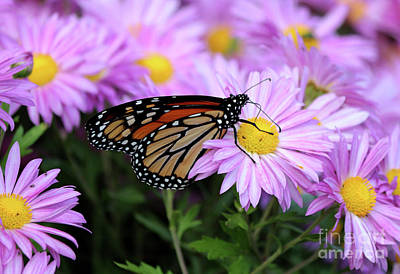 Designs Similar to Monarch Butterfly