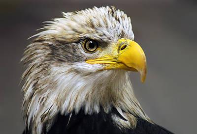 Eagle Art Prints