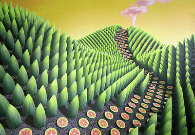 Bamboo Paintings
