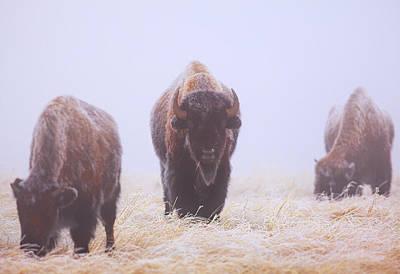 Buffalo National River Art
