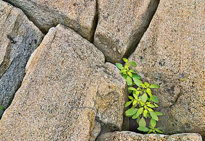 Crevice Photographs Original Artwork