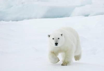 Designs Similar to Polar Bear by Dagsjo