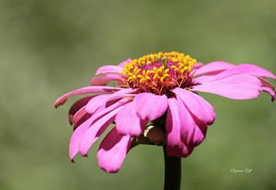 Designs Similar to Pink Coneflower In Pastel