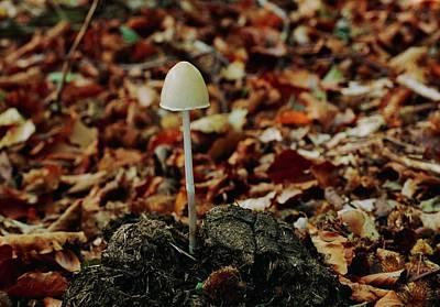 Designs Similar to Dung Mottle Gill Mushroom