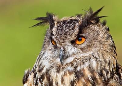 Designs Similar to Eurasian Eagle-owl