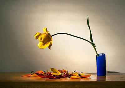 Designs Similar to Yellow Tulip 2 by Ivan Vukelic