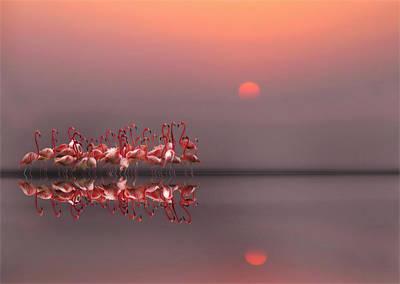 Flamingo Photographs