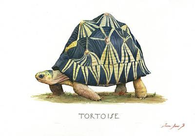 Designs Similar to Radiated Tortoise