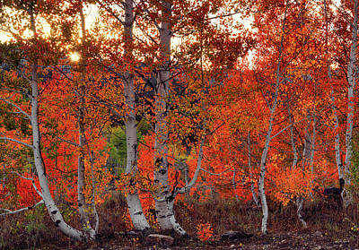 Designs Similar to Red Aspens by Leland D Howard