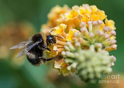 Pollen Art