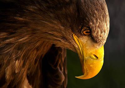 Designs Similar to Eagle Pursues Prey